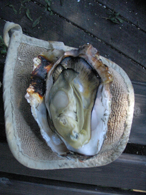 bbqOyster