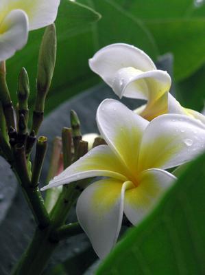 whiteflower02